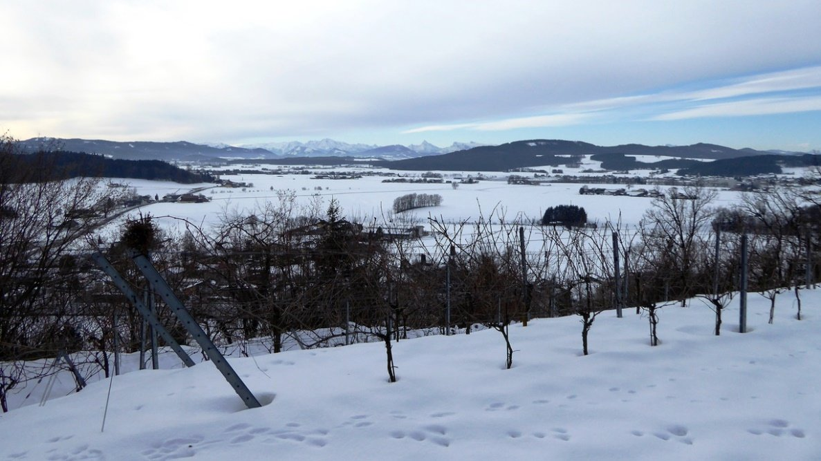 Südblick über den Weingarten