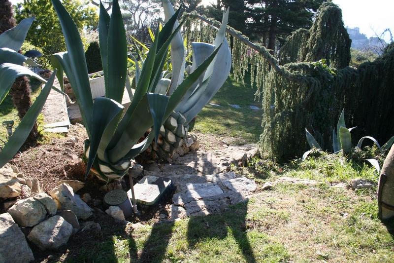 Entretien de jardins : le vieil escalier à droite réapparait