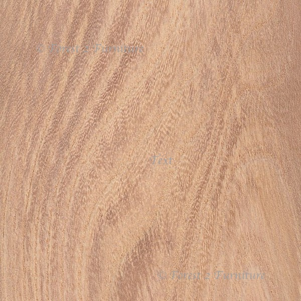 Wych Elm  - limited stock available