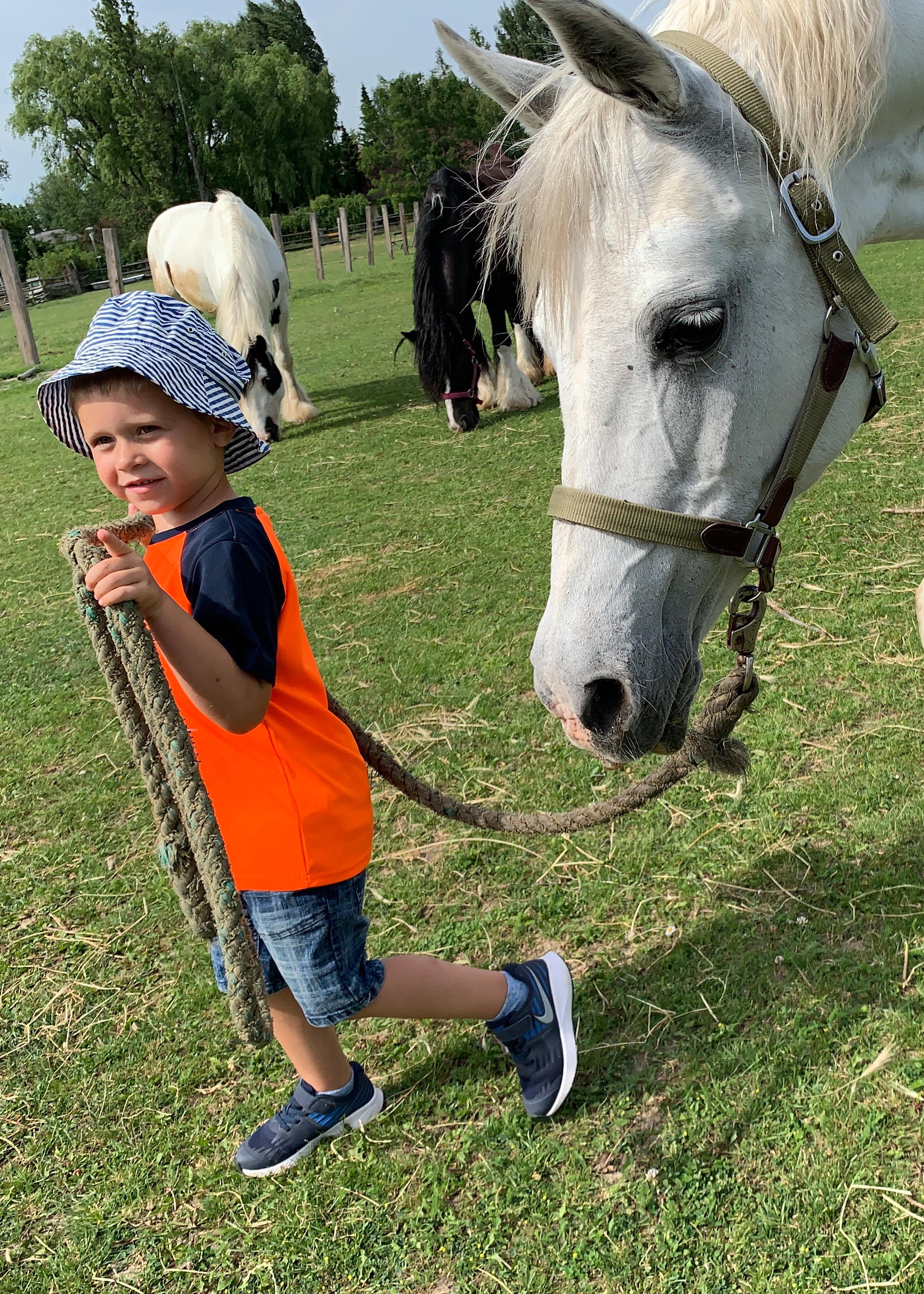 Pferde pic13