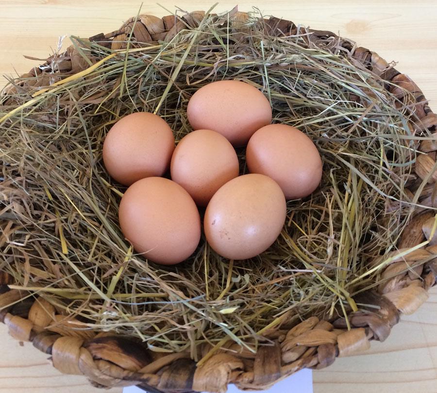 https://0501.nccdn.net/4_2/000/000/008/982/Eggs-web-900x809.jpg