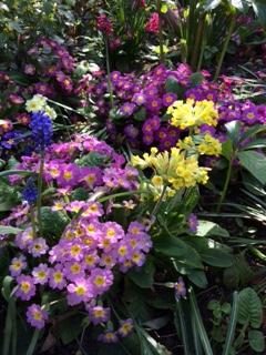 Jenni's garden