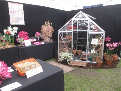 This year's stand incorporated a small greenhouse to demonstrate that Nerine Bowdenii are hardy and that N. Sarniensis need protection.
