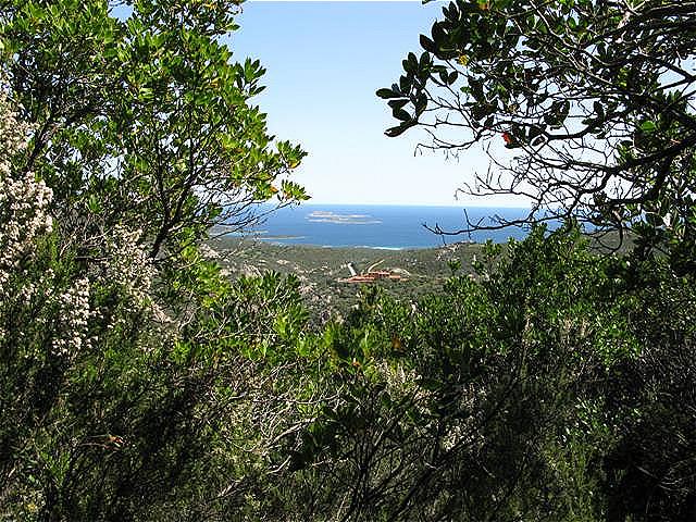 Weg durch die immergrüne mediterrane Macchia