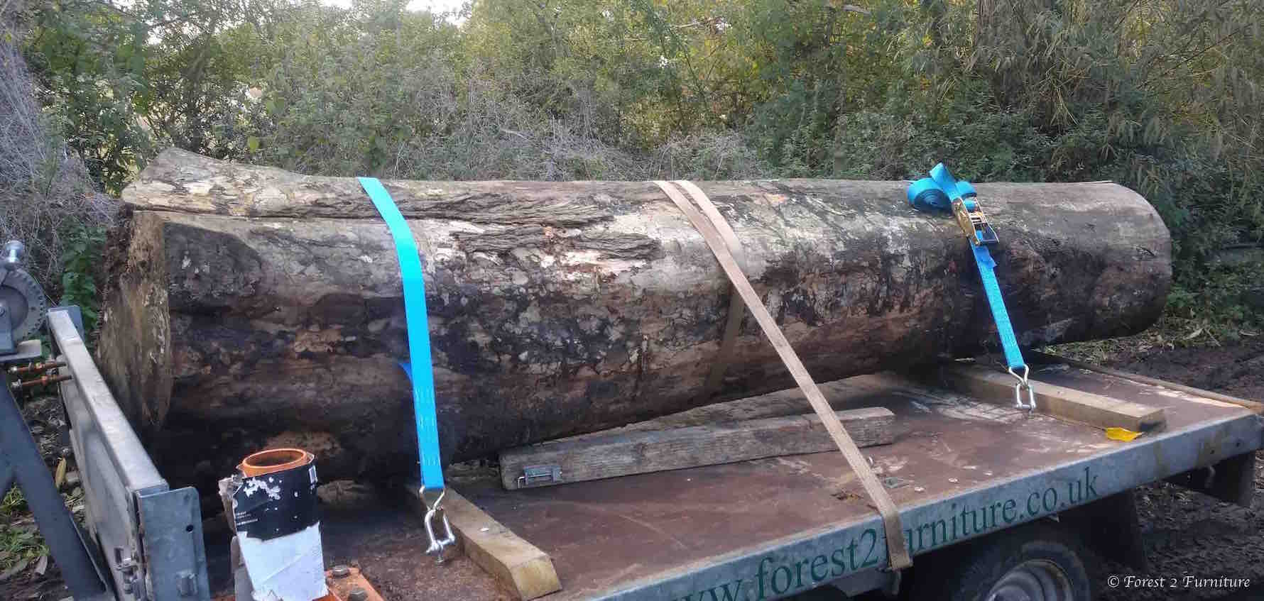 English Elm log arriving at our mill.