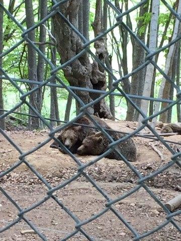Καταφύγιο Αρκούδας