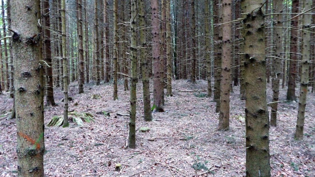 In Natura sind die Hügelgräber deutlich zu erkennen !