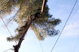 Démontage du Pin en cours, ci dessous démontage et déviation du tronc afin d\'éviter la toiture