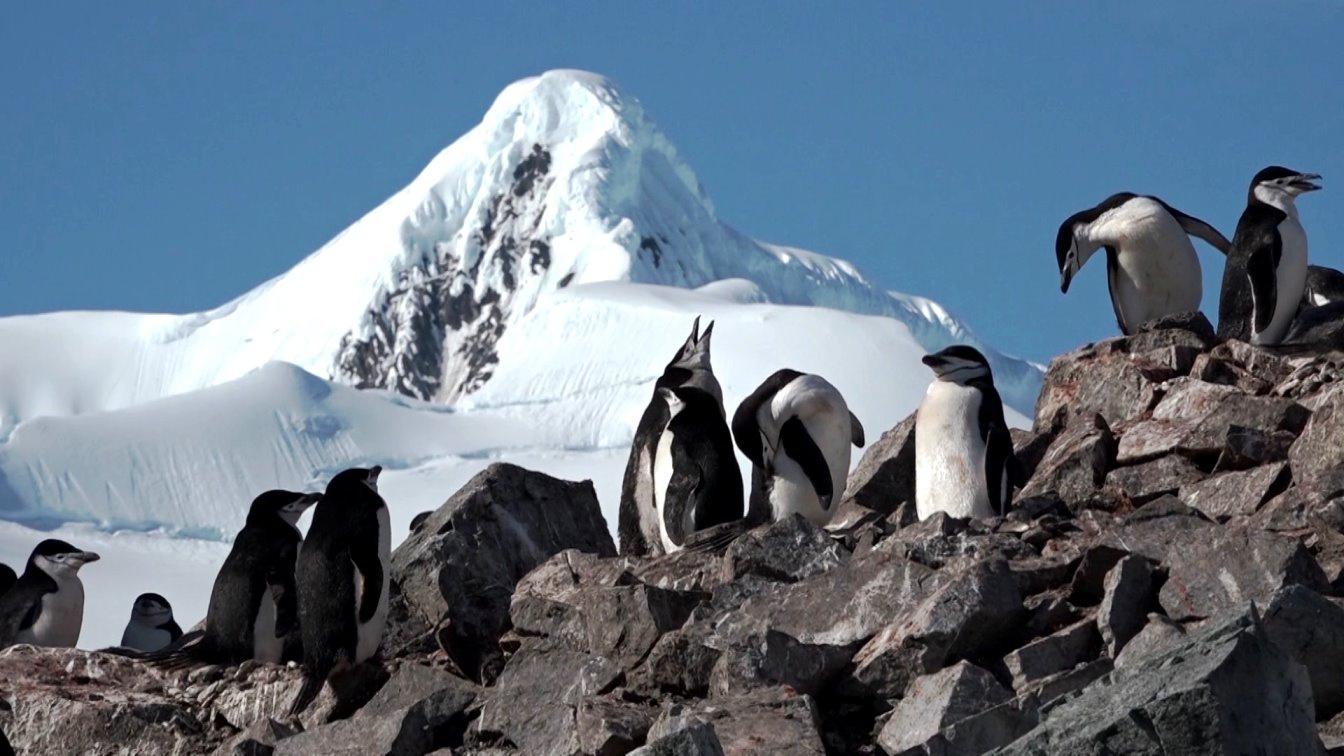 Die Pinguine brüten auf den schneefreien Felsen