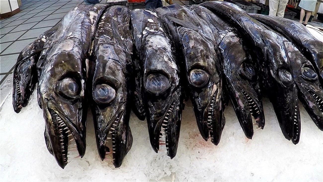 """""""Grimmige Gesellen"""" ! Der schwarze Degenfisch ist eine Delikatesse aus der Tiefsee Madeiras !"""