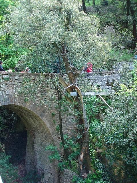 An einer steinernen Brücke steht noch der Olivenbaum,  in dessen Zweigen, der Legende nach, die Vögel Franziskus' Predigt gelauscht haben sollen