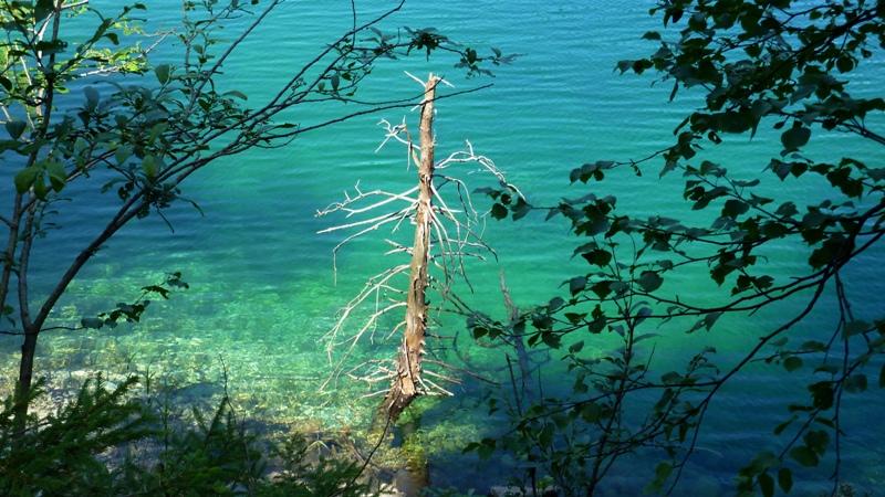Toter Baum im smaragdgrünen Wasser