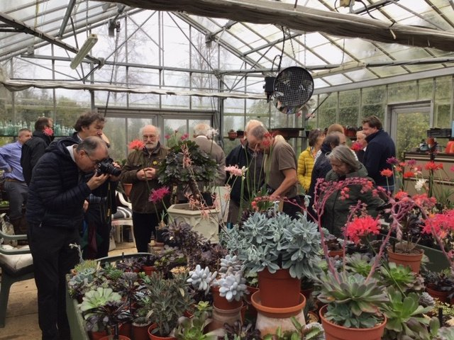 NAAS members enjoying the variety of plants on display.