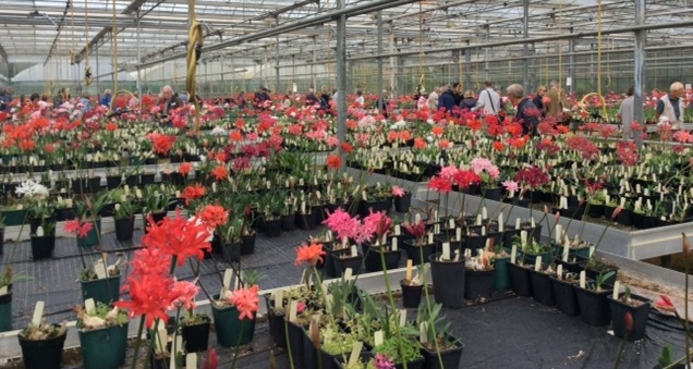 Visitors enjoying the opportunity to browse amongst the hundreds of stunning blooms.
