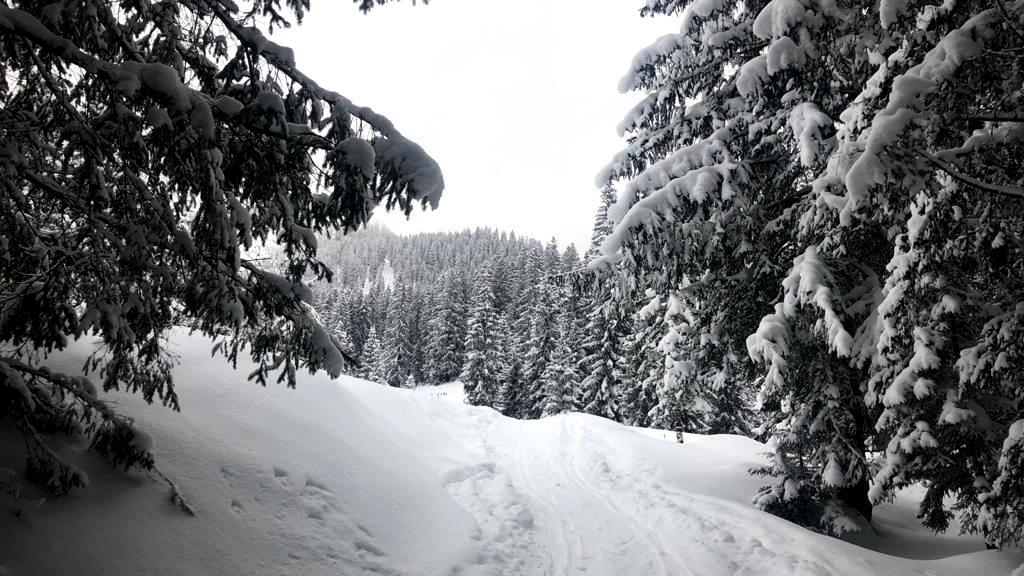 17. Jänner 2021 Goiserer Hütte
