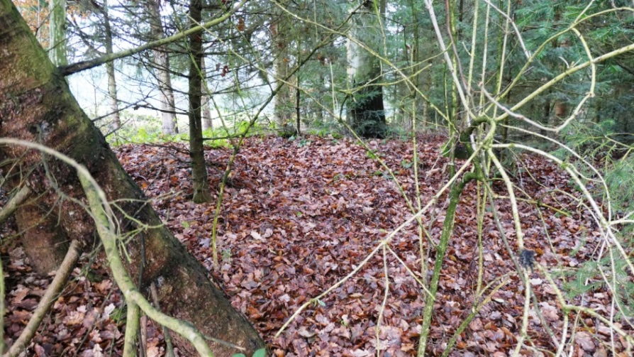 Laubbedeckter flacher Tumulus