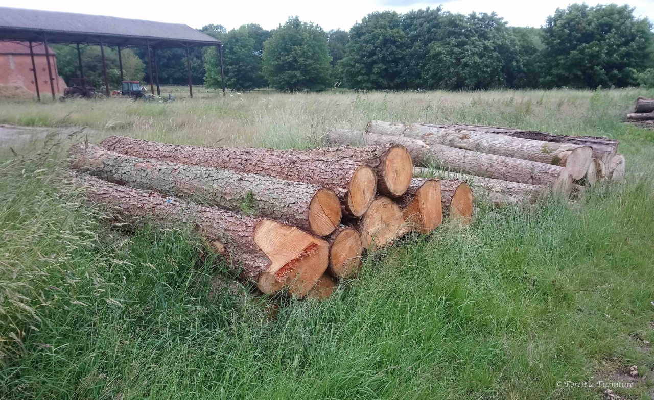 Pile of freshly cut Larch and Ash trees awaiting processing