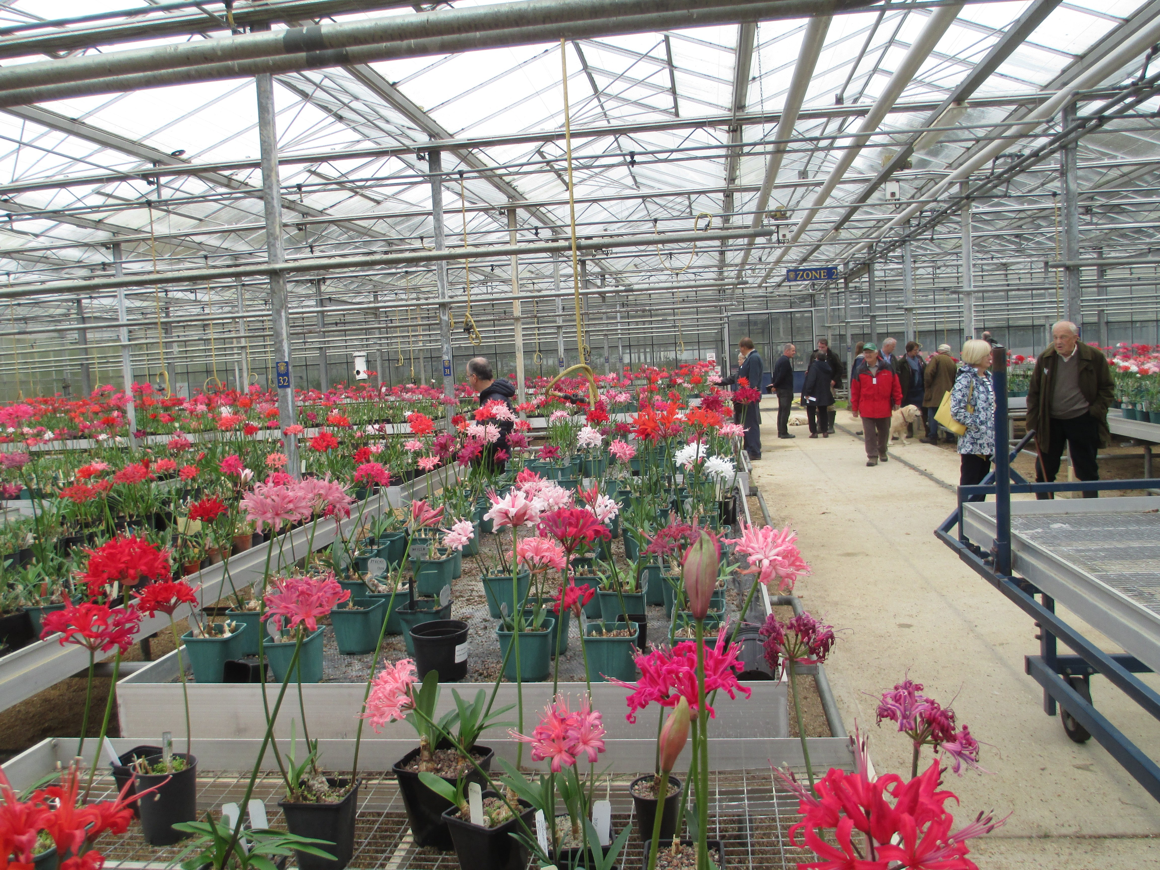 Members enjoying a visit to the glasshouse to view blooms of new varieties being developed, as well as old favourites.