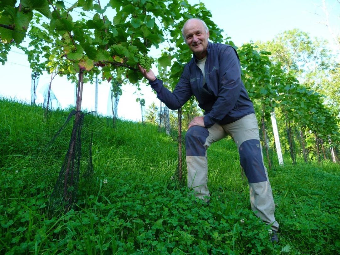 Nachschau im Weingarten