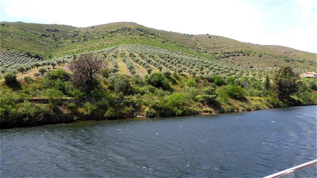 Mandel- Apfel und Aprikosenplantagen
