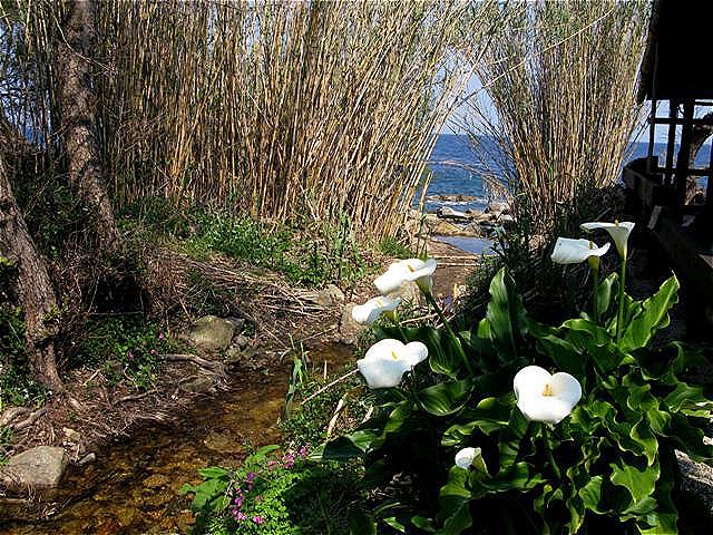 Blüten an kleinem Bachlauf, kurz vor der Mündung ins Meer