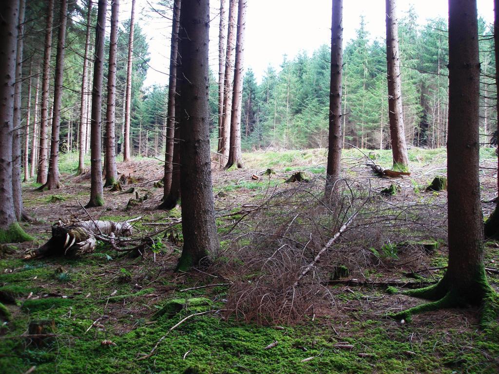 Historische Siedlung mitten im Wald