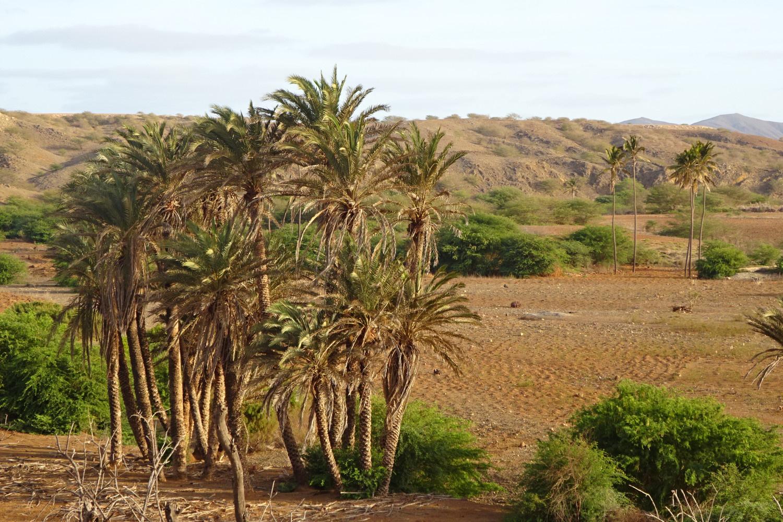 Palmiers à Boca Lagoa