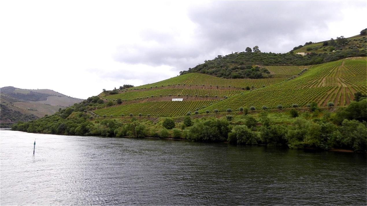 Weingärten bis zum Fluss herab