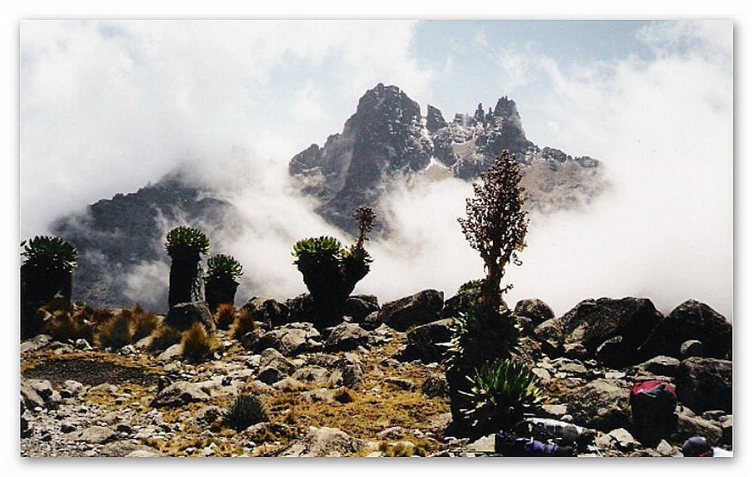 Mount Kenia von Norden - Senecien in den Wolken