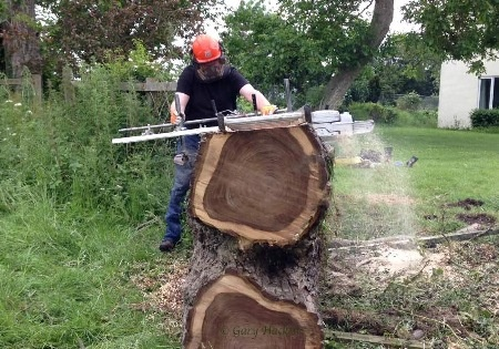 Using a chainsaw mill to reduce the size of a Walnut tree to enable loading on the bandsaw mill