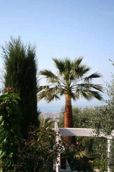 Vue éloignée du palmier élagué