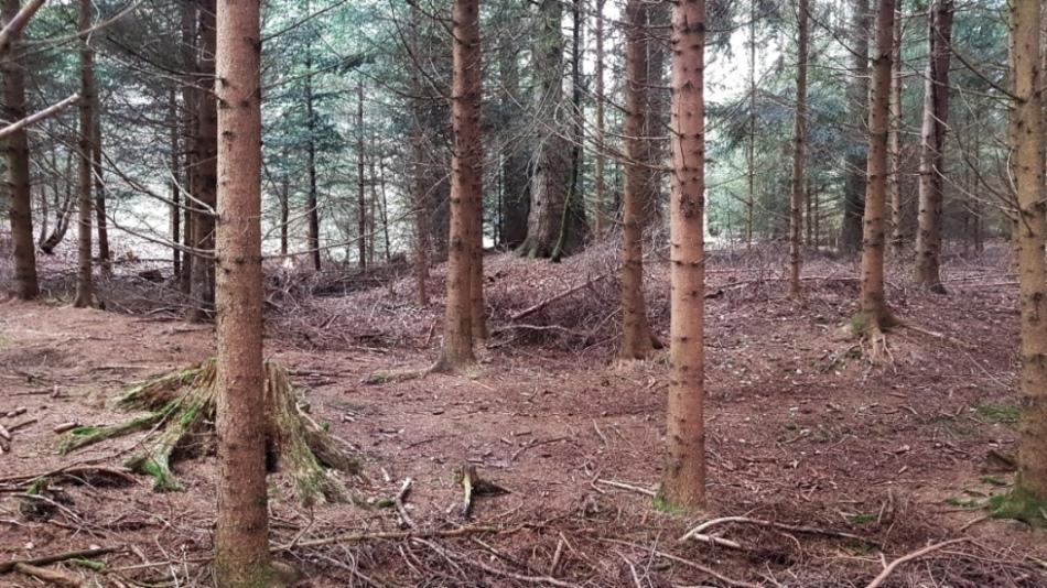 Annäherung - erste Bodenerhebungen sind erkennbar