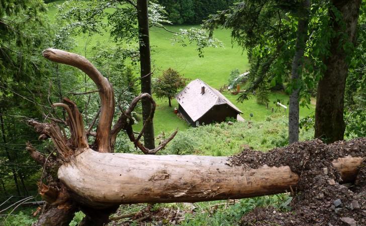 Schafbachalm - Hütte