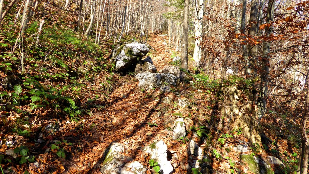 Steiler Waldpfad mit Schrofen