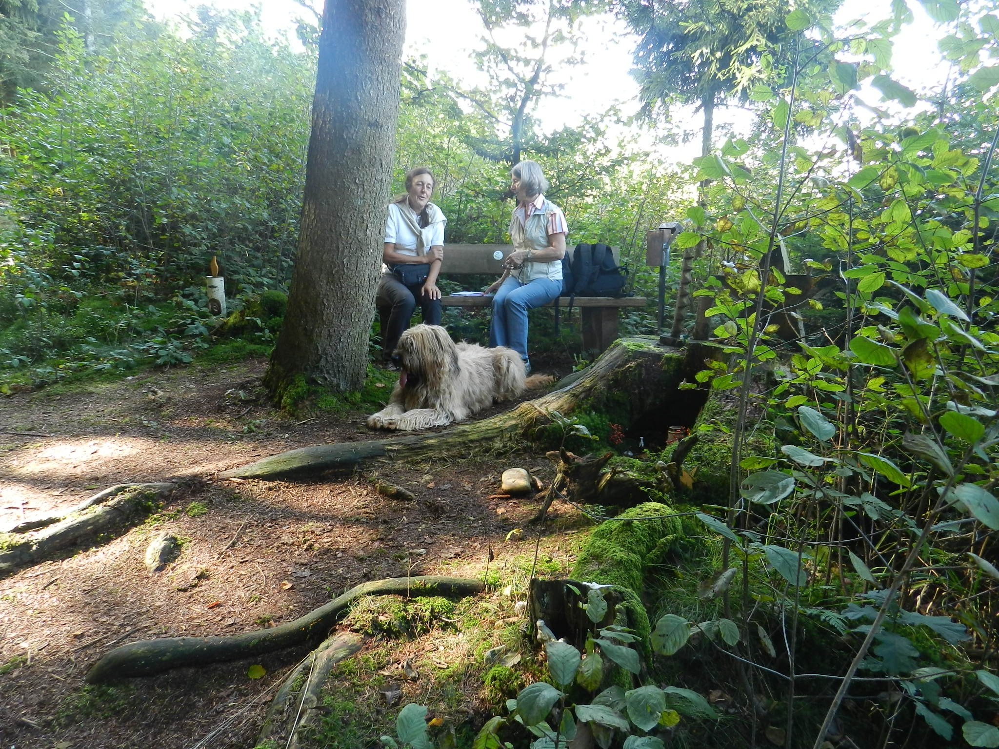 Rast beim Waldkriperl