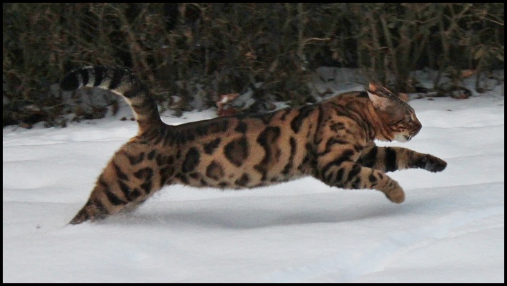 Bakari im Schnee