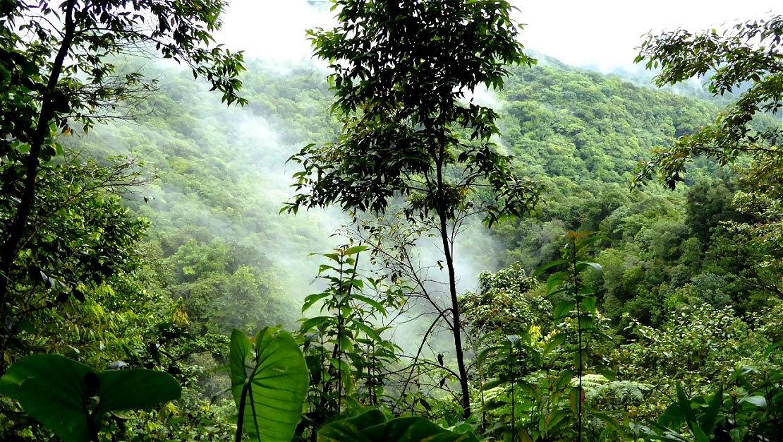 Dominica - die grüne Insel - Wasserreichtum !