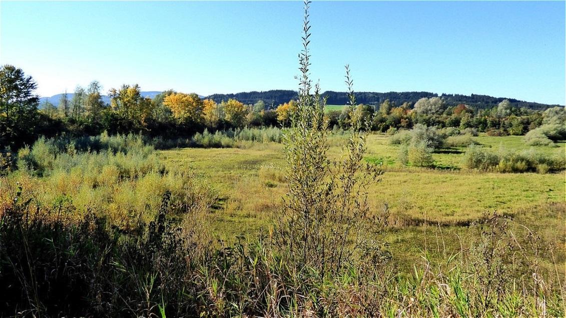Biotop Ausgleichsbecken Lengau in derTrockenperiode