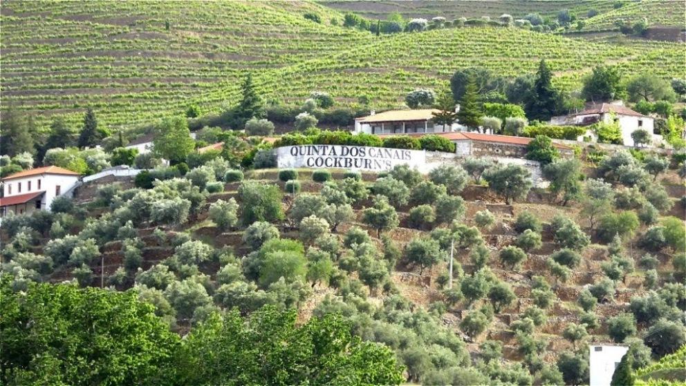 Weinreben und Olivenbäume