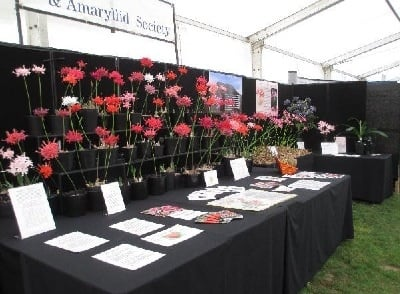 Nerine Sarniensis blooms in a wide range of colours with written information in the foreground.
