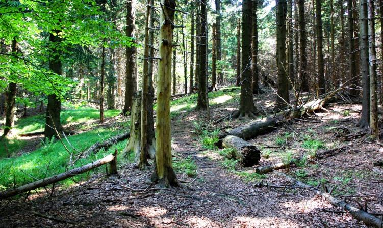 Waldweg zur Großen Plaike