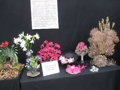 Some delightful arrangements by Sue Bedwell showed the use of a variety of Amaryllid blooms as cut flowers.