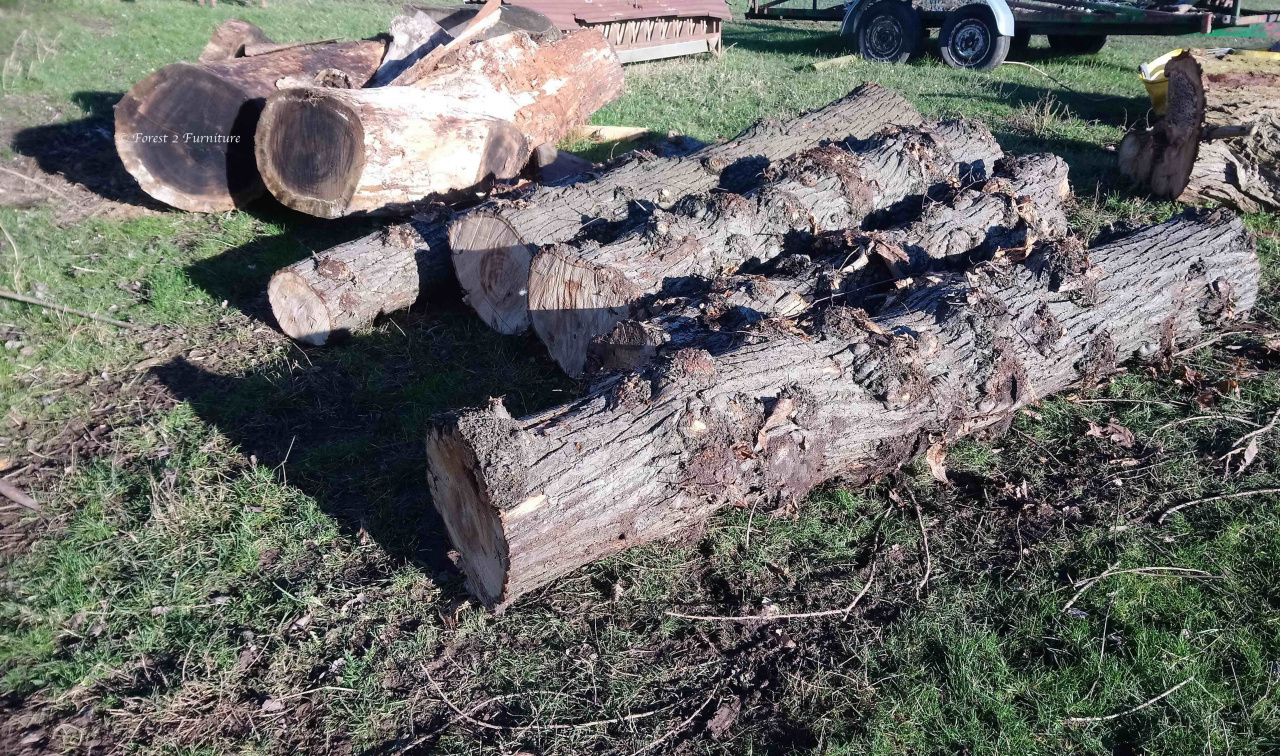 Felled Sweet Chestnut and Walnut trees waiting to be milled