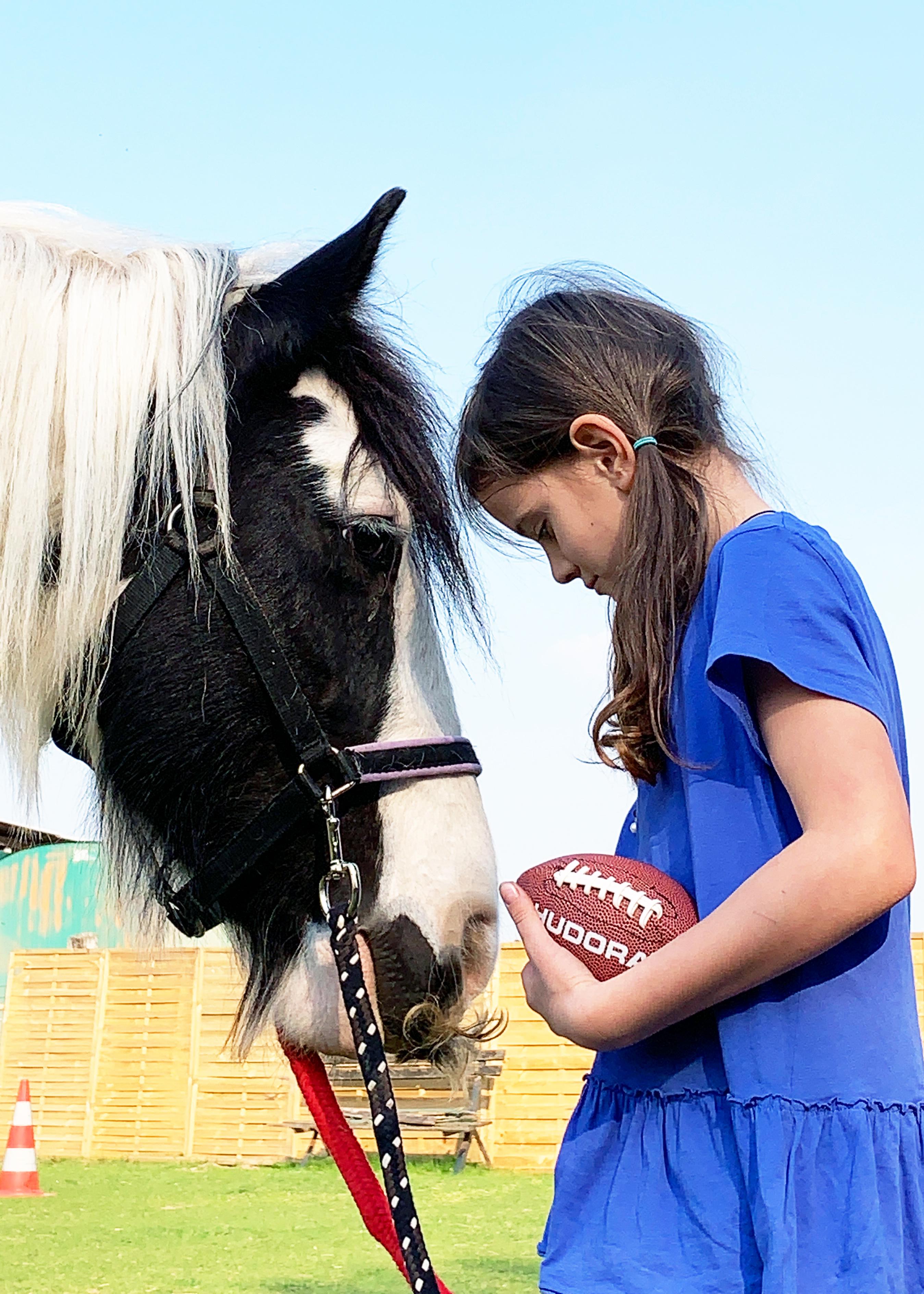 Pferde pic1
