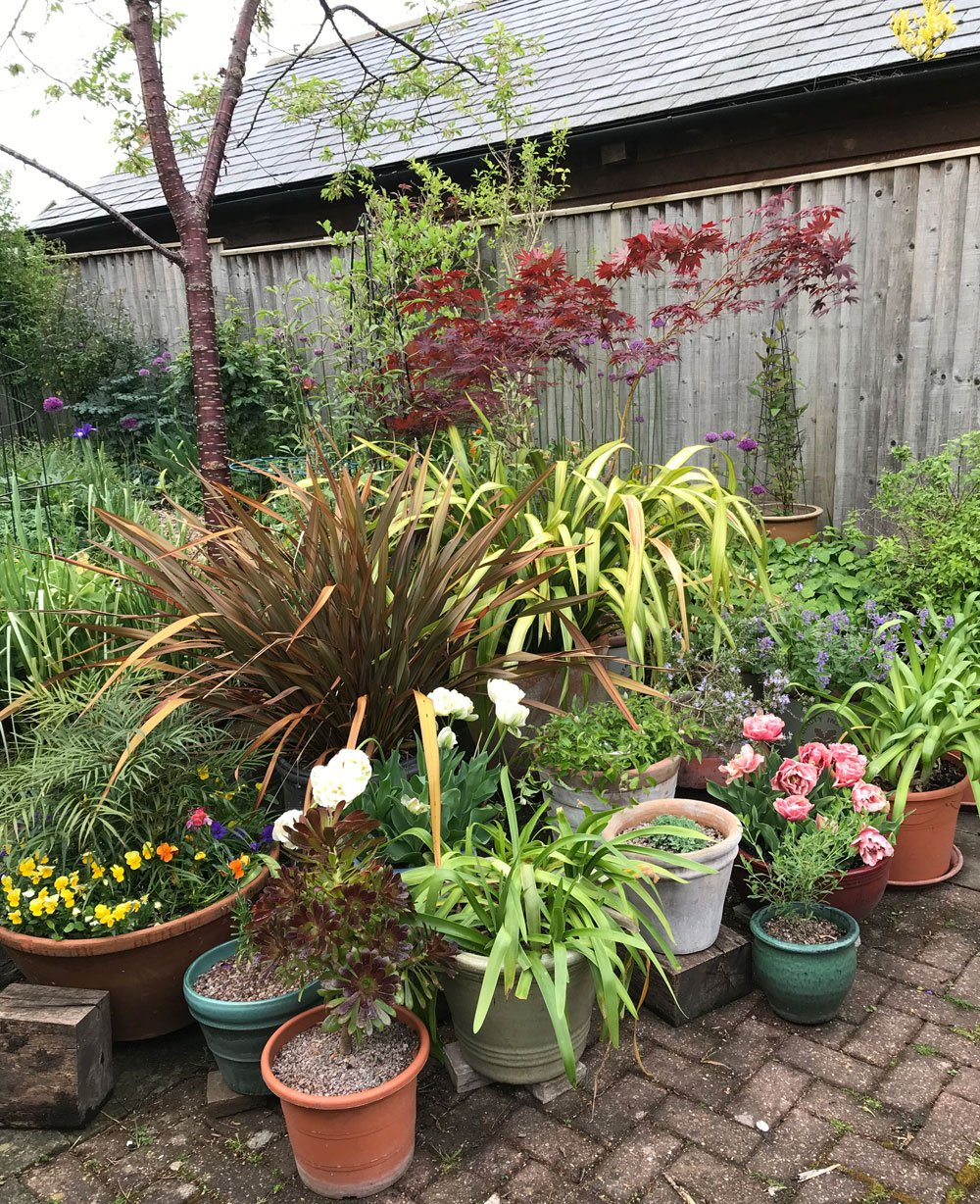 Sheelagh's pots looking lovely