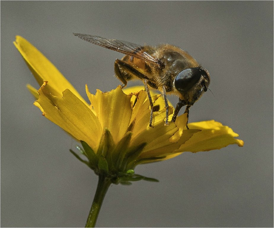 3rd Place: Honey Bee taking a drink (Roger Paxton)