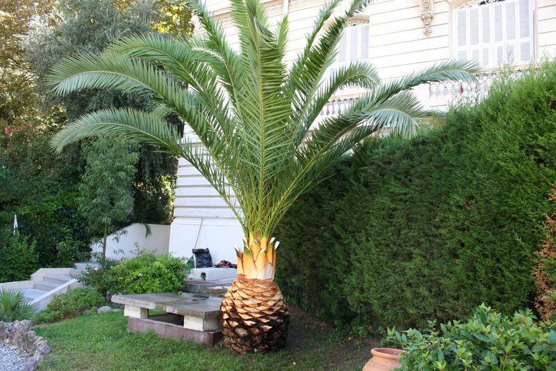 Vue du palmier aprés le travail