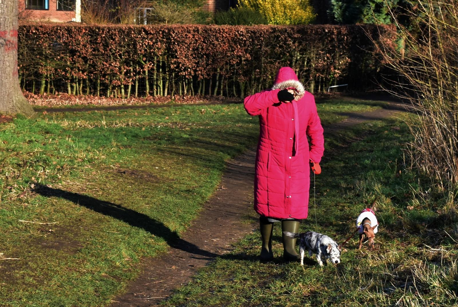 Audley End Park Land 2019