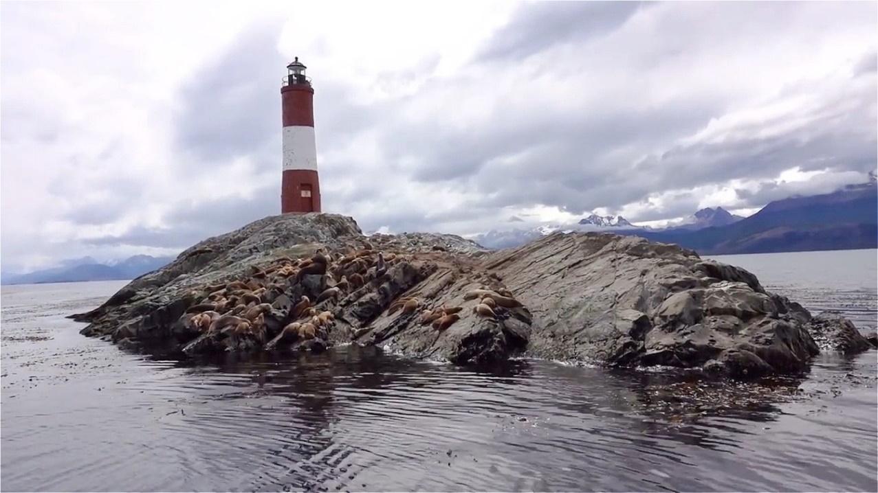Seelöwen am Leuchtturmfelsen