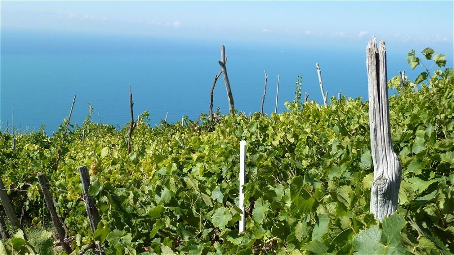 Wein über dem blauen Meer